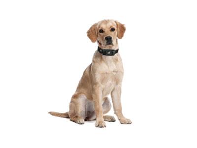 警犬定位音频记录仪